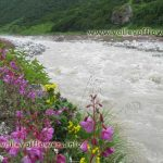 Number of Days required in seeing Valley of Flowers