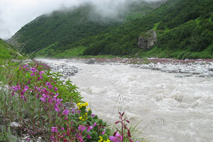 valley-of-flowers-11