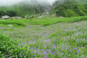 valley-of-flowers-14