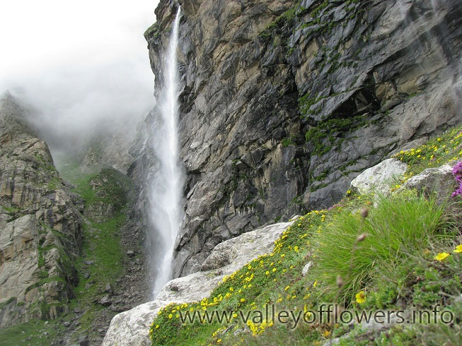 Vasudhara Falls, You can see flowers