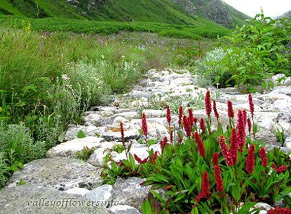 Valley of Flowers Trek Itinerary